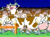 Mad Cows!