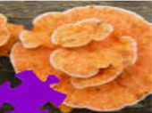 Mushrooms Jigsaw