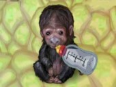 My Funky Ape