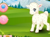 Pet Stars: Lovely Lamb